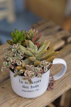 Casinha Bonitinha: Um jeito diferente de plantar suculentas
