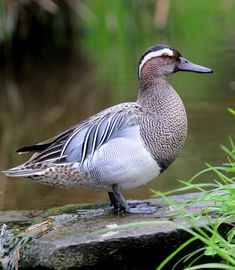 Pretty Birds, Beautiful Birds, Animals Beautiful, Kinds Of Birds, All Birds, Exotic Birds, Colorful Birds, Swans, Canard Mandarin