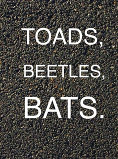 Toads, beetles, bats. The Wednesday Wars.