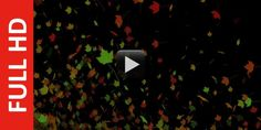 Today I am bringing bestslow motion autumn tree leaves blowing in the wind and it is created in ful...