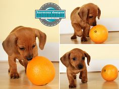 It's like comparing Doxies and Oranges.