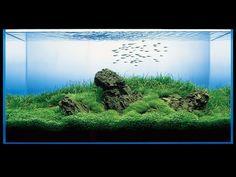 amano takashi fish tank; overgrown landscapes