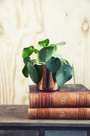 gröna växter - Sök på Google Green Plants, House Plants, Planter Pots, Sweet Home, Colours, Creative, How To Make, Gifts, Diy