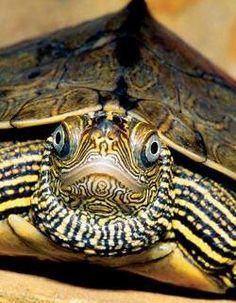 Turtle Face!!