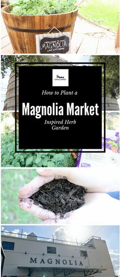 How to Plant a Herb Garden Inspired by Magnolia Market | Planning or just returned from a trip to the Silos in Waco? Create your own little piece of the Magnolia: How to Plant a Joanna Gaines-Inspired Herb Garden.  #Theharvesteffect #sponsored