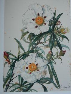 Flors a la natura
