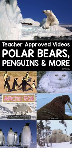 teacher approved list of Arctic Animal Videos for kindergarten, first grade, and preschool. Learn about polar bears, arc First Grade Science, Kindergarten Science, Teaching Science, Teaching Habitats, Waldorf Kindergarten, Kindergarten Themes, Preschool Class, Elementary Science, Winter Activities
