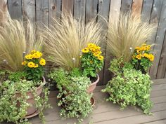 Repetition...added the Black-eyed Susan's for a little summer color.