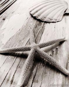 Nautical Decor Starfish and Sea Shell Black and White Nature Photo Macro Coastal Living Beach Cottage Home Shabby Chic Art Vintage Look. $25.00, via Etsy.