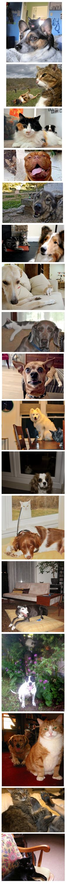 Cats and Dogs Photobombing Each Other