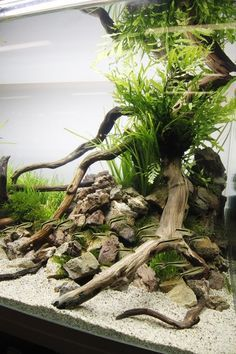 Fish & Aquariums Brave Driftwood Aquarium Reptile Decoration Slate Centerpiece Branch Natural Medium