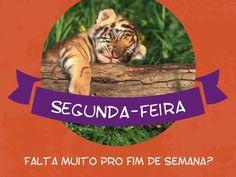 Não vejo a hora de me encontrar com a família e os amigos pra festejar! Quero logo o fim de semana!  #segunda #sono #tigre #animais