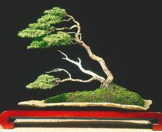 "Bonsai (盆栽) ""árvore em bandeja""  style: Fukinagashi juniperus"