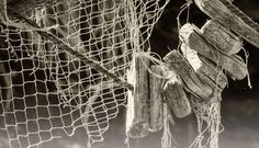 Fishing with compromised nets - creation.com