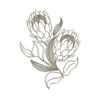 Protea designs that looks like hand drawn sketches. Protea Art, Flor Protea, Protea Flower, Realistic Drawings, Love Drawings, Art Drawings, Kawaii Drawings, Flower Sketches, Art Sketches