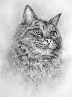 Cat Named Fluffy  pencil drawing  print  image by valdasfineart