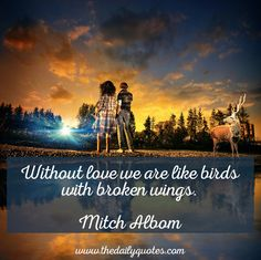 Without love we are like birds with broken wings. – Mitch Albom thedailyquotes.com