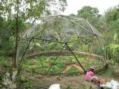 Bamboo dome with wattle fence