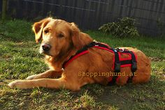 Dog Harness Escape Proof