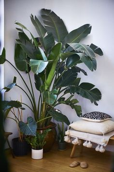 Great living room styling - little boho with a big house plant