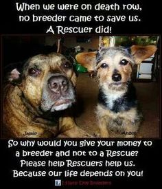 PLEASE Rescue: stop breeders, (even though I know many are decent people)....capitalism and humanism don't mix...ADOPT instead of over populate!  Just like children...you really want one?  Get over your ego and adopt!