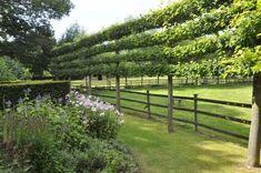Tree garden fences