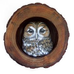 Gufo Tawny nido | Un fantastico portafortuna per decorare la vostra casa e un