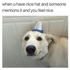 There's two things I love: Good Dogs, and Good Dog Memes. Of course, the best part about good dog memes is they remind me of good dogs. Funny Animal Memes, Dog Memes, Funny Animal Pictures, Cute Funny Animals, Funny Cute, Funny Dogs, Animal Pics, Funny Happy, Animal Captions