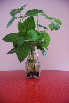 Growing Herbs In Water: Information On Herbs Grown In Water