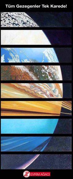 Tüm Gezegenler Tek Karede! – Evrim Ağacı