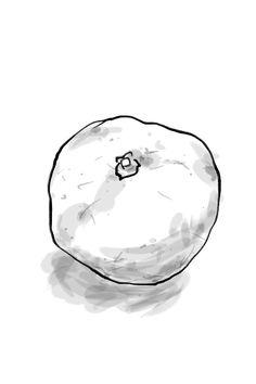 """I drew a orange """"Tamatsu Mikan""""."""