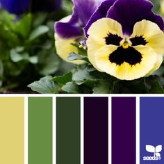 SnapWidget | today's stunning photo for { pansy palette } is by @peoniesncream ... i was so excited to see Beatriz's photo because pansies are a sentimental favorite of mine (they were my Grandma's favorite flower) ... beyond the sentimental aspect, this palette was a blast to create because i enjoyed pushing a it bit bolder in hues and chroma ... thanks so very much for this wonderful and inspiring #SeedsColor photo share, Beatriz!