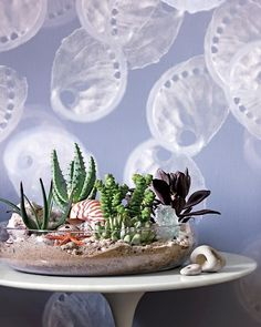 I already love succulents and seashells separately - but putting them together? It's under the sea genius!