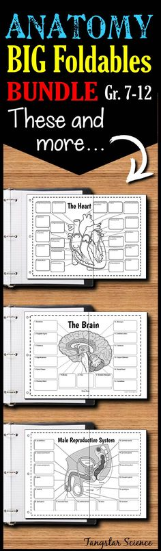 This collection of over 10 big anatomy foldables will solve your anatomy teaching needs.  Great to use for teaching, review, graphic organizer, and test prep materials.  Each foldable works in either an interactive notebook or binder.  All foldable comes in at least 4 options so that you can differentiate for you classroom.  Each prints out in 2 or 3 pages.  There's very minimal cutting and taping.  Check them out!