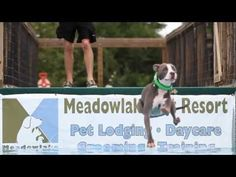 VIDEO: Dogs Dock Jumping in Slow Motion - Cabin Life magazine