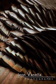 """Meleagris""  Falmouth, Maine  #fineart #photograph #abstract #brown #feather"