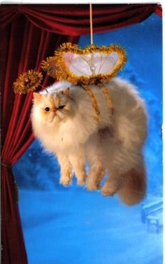 An Angel | 26 Things Cats Are Not