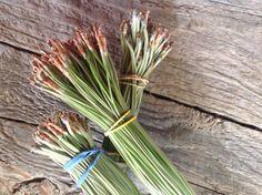 3 Bundles Ponderosa Green Pine Needles 100 by LadyHawkTreasures