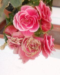 Hello Rosa, you are gorgeous.