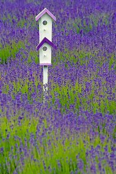 Two story birdhouse w/ roofs to match the lavender field that it's setting in.