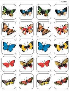 Teacher Created Resources Moths & Butterflies Stickers, Multi Color 120 Self-Adhesive stickers per pack. Great for incentives and decorations. Preschool Colors, Preschool Centers, Preschool Lessons, Preschool Activities, Imagen Natural, Teacher Created Resources, Chenille, Animal Projects, Toddler Fun