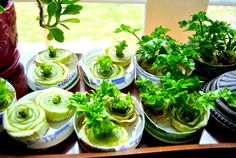 Zelf je groenten verbouwen in een (moes)tuin is natuurlijk hartstikke leuk om te doen, maar wist je dat je groente vaak weer opnieuw kunt laten groeien? Wanneer je tijdens het koken wat resten of een kontje van een groente (zoals sla of bleekselderij) overhoudt, kun je deze in de meeste gevallen weer hergebruiken. In dit blog noemen wij 10 groenten die je letterlijk en figuurlijk nieuw leven kunt inblazen en geld kunt besparen!