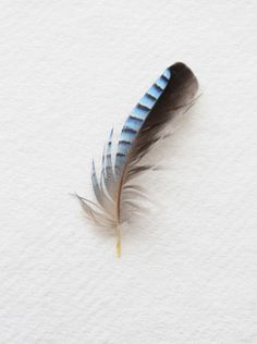 the third time that I've found a jay feather Jay Feather, Feather Art, Feather Tattoos, Bird Feathers, Nester, Feather Painting, Blue Jay, Beautiful Birds, Tattoo Inspiration