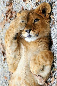 Peek-a-boo!!