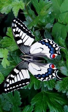 17 Pictures of the Best Beautiful Butterfly Wings - meowlogy Art Papillon, Papillon Butterfly, Butterfly Kisses, Butterfly Flowers, Butterfly Wings, White Butterfly, Picture Of A Butterfly, Butterfly Artwork, Butterfly Photos