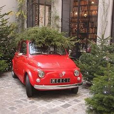 christmas trees in the courtyard