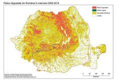 Defrişările ilegale, declarate oficial vulnerabilităţi ale siguranţei naţionale. Trei hectare de pădure dispar în fiecare oră în România - Gândul