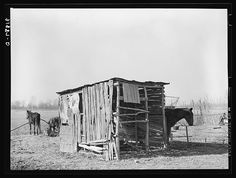 Shed for mules and horses on sharecropper's place near Transylvania Project. Louisiana
