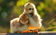 Cute Baby Animal Hd Wallpapers | 5 Animals Desktop HD ...