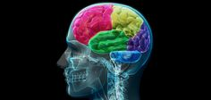 Five brain challenges we can overcome in the next decade